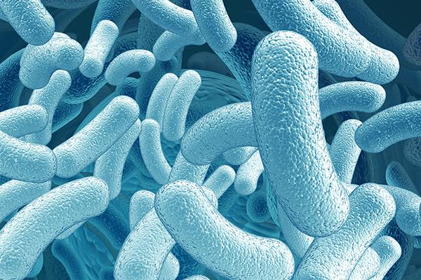 mikrobiom-bestimmung-bamberg